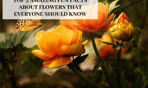 Top 5 Amazing Fun Facts About Flowers That Everyone Should Know