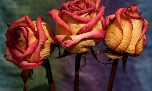 Best Ways To Use Dry Roses