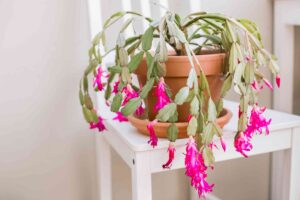 Some indoor flowers that will add color and vibrance to your house
